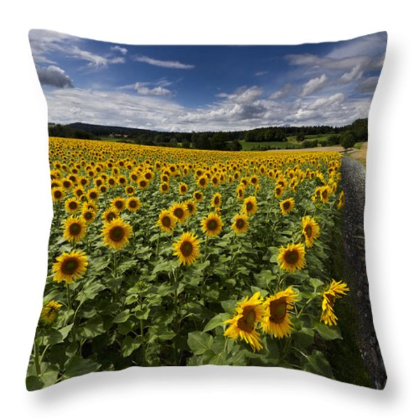 A Sunny Sunflower Day Throw Pillow by Debra and Dave Vanderlaan