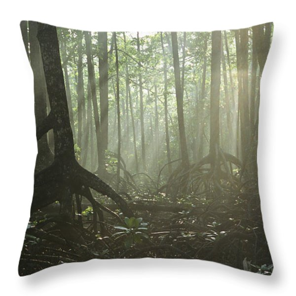 A Tangle Of Buttressed Roots In A Misty Throw Pillow by Tim Laman