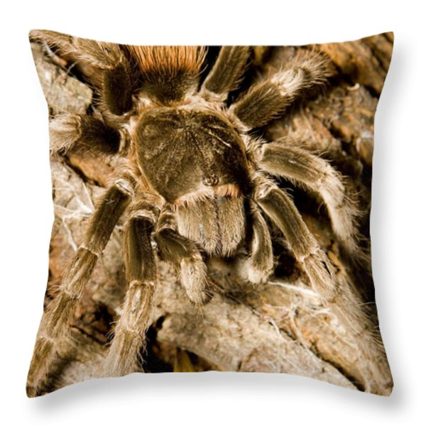 A Tarantula Living In Mangrove Forest Throw Pillow by Tim Laman