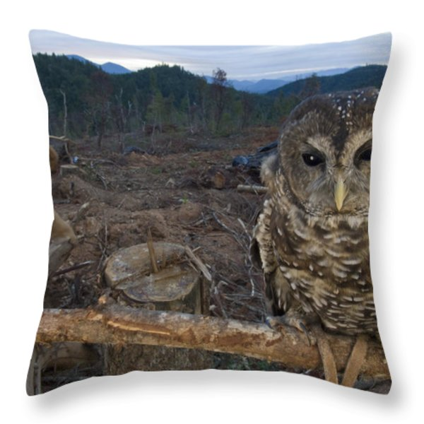 A Threatened Northern Spotted Owl Throw Pillow by Joel Sartore