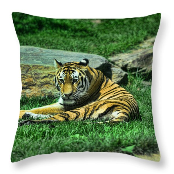 A Tiger's Gaze Throw Pillow by Paul Ward