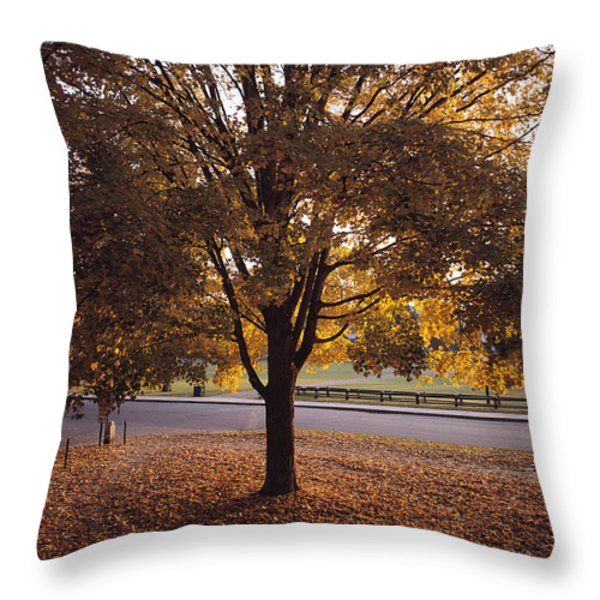 A Tree In Autumn Foliage On The Grounds Throw Pillow by Sam Abell