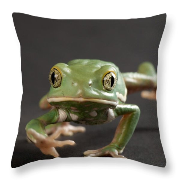 A Waxy Monkey Frog Phyllomedusa Throw Pillow by Joel Sartore