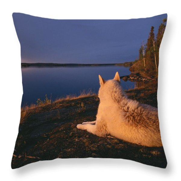 A White Husky Gazes At The Water Throw Pillow by Paul Nicklen
