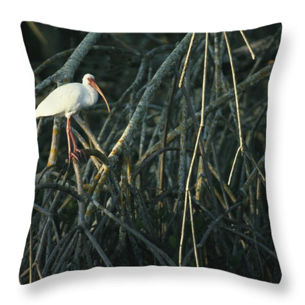 A White Ibis Perches On A Mangrove Tree Throw Pillow by Klaus Nigge