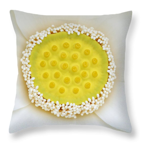 A White Lotus In Its Early Stage Throw Pillow by Stephanie Lane