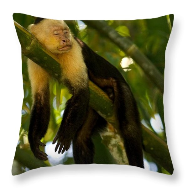 A White-throated Capuchin Monkey Throw Pillow by Roy Toft