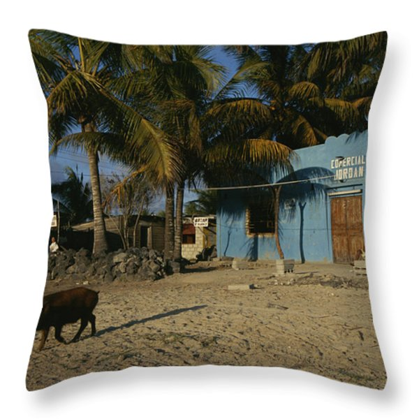 A Wild Boar Wanders Through A Village Throw Pillow by Steve Winter