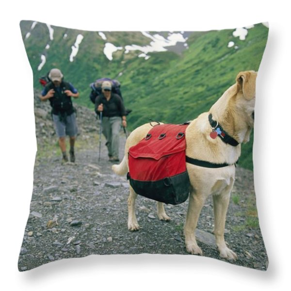 A Yellow Labrador, Wearing A Backpack Throw Pillow by Rich Reid