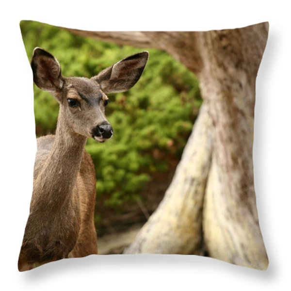A Young Deer In A Grove Of Rare Throw Pillow by Charles Kogod