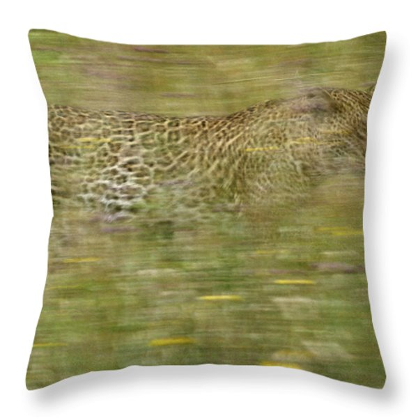 A Young Female Leopard Moving Throw Pillow by Michael Melford