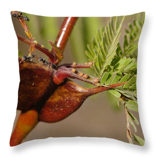 Acacia Thorns With Pseudomyrmex Ants Throw Pillow by Raul Gonzalez Perez