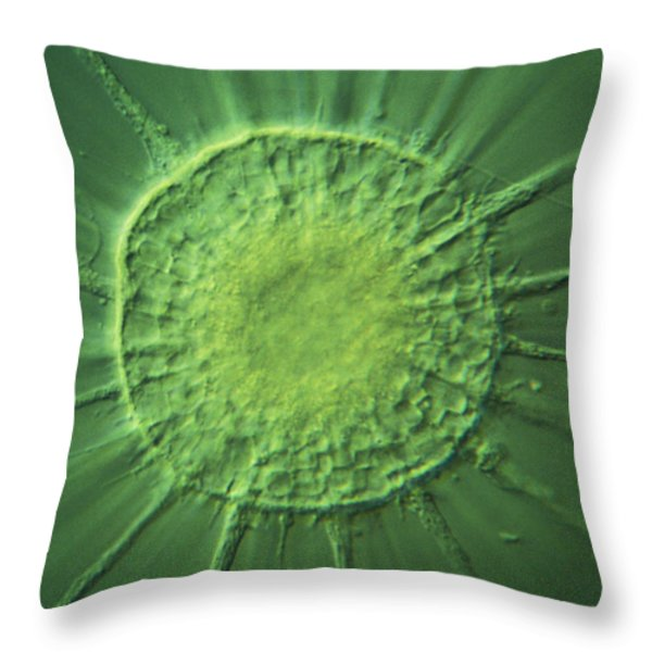 Actinophyrs Lm Throw Pillow by MI Walker
