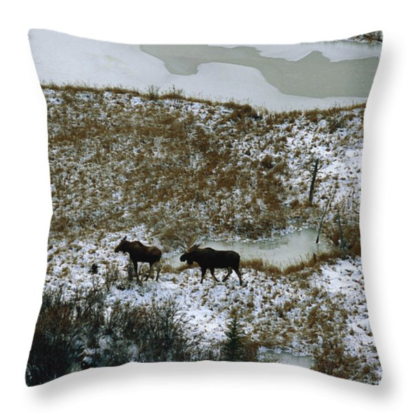 Aerial Of A Male And Female Moose Throw Pillow by Norbert Rosing