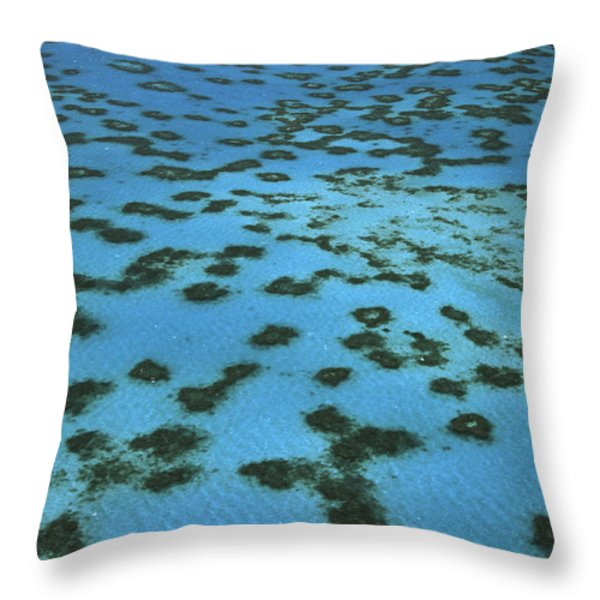 Aerial View Of Great Barrier Reef Throw Pillow by L Newman and A Flowers and Photo Researchers
