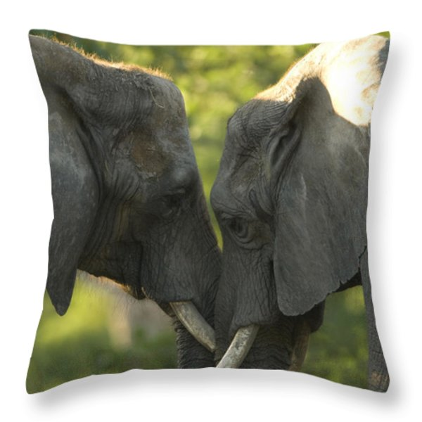 African Elephants Loxodonta Africana Throw Pillow by Joel Sartore