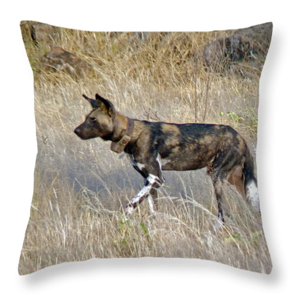 African Wild Dog Throw Pillow by Tony Murtagh