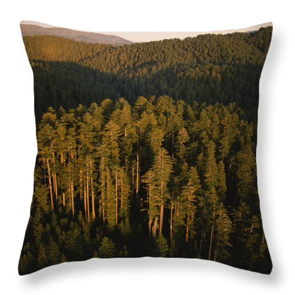 Afternoon Sunlight Bathes Redwood Trees Throw Pillow by James P. Blair