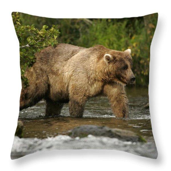 Alaskan Brown Bear Ursus Arctos Walking Throw Pillow by Roy Toft