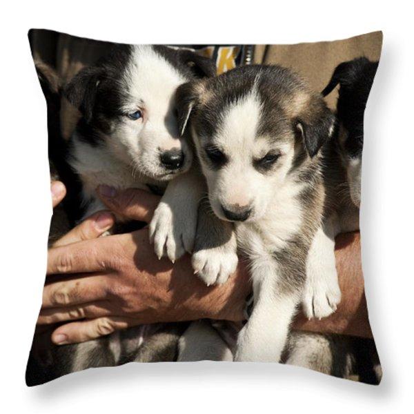 Alaskan Huskey Puppies Throw Pillow by John Greim