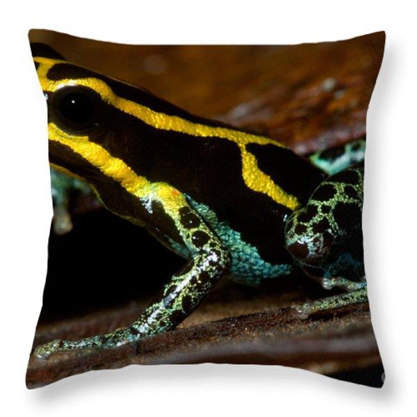 Amazonian Poison Frog Throw Pillow by Dant� Fenolio