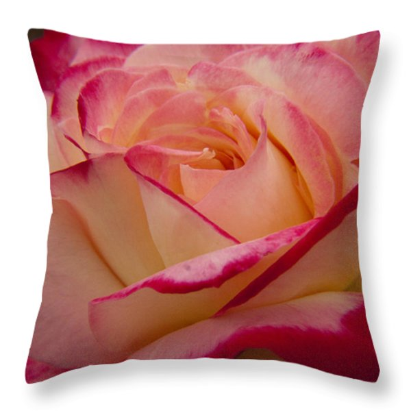 American Beauty Rose Throw Pillow by Darleen Stry