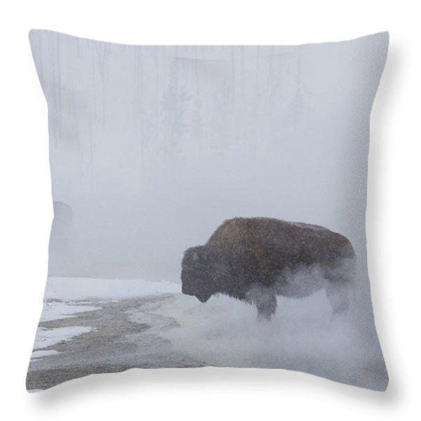 American Bison Bison Bison Graze Throw Pillow by Norbert Rosing