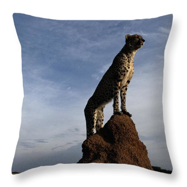 An African Cheetah Guards Its Territory Throw Pillow by Chris Johns