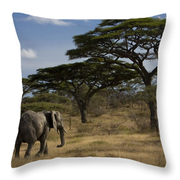 An African Elephant Walks Among Acacia Throw Pillow by Ralph Lee Hopkins