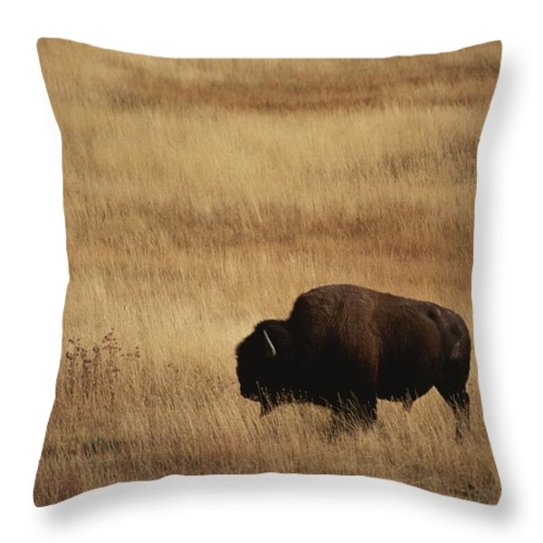 An American Bision In Golden Grassland Throw Pillow by Michael Melford