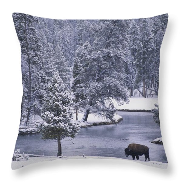 An American Bison Alongside A River Throw Pillow by Michael Melford