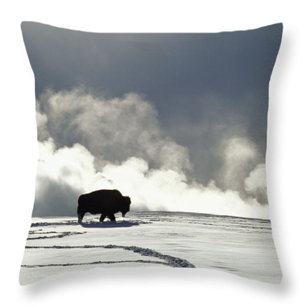 An American Bison Bison Bison Covered Throw Pillow by Norbert Rosing