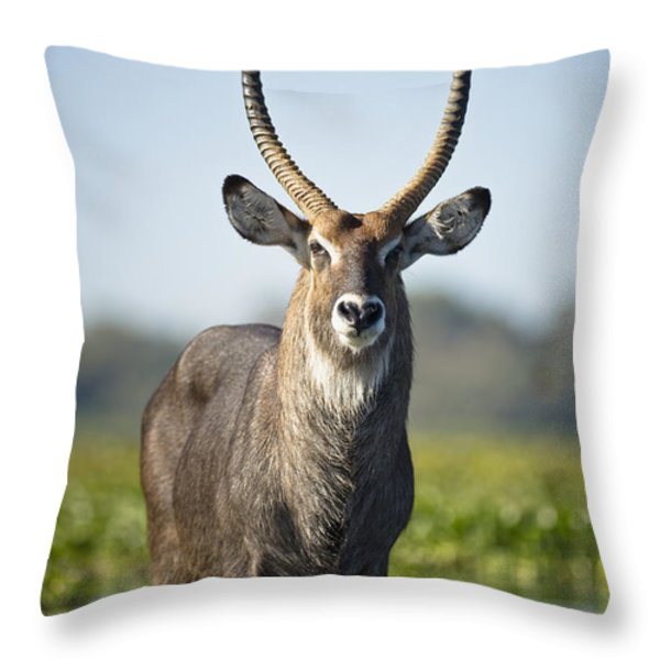 An Antelope Standing In Shallow Water Throw Pillow by David DuChemin