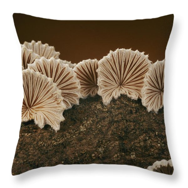 An Array Of Common Split Gill Mushrooms Throw Pillow by Darlyne A. Murawski