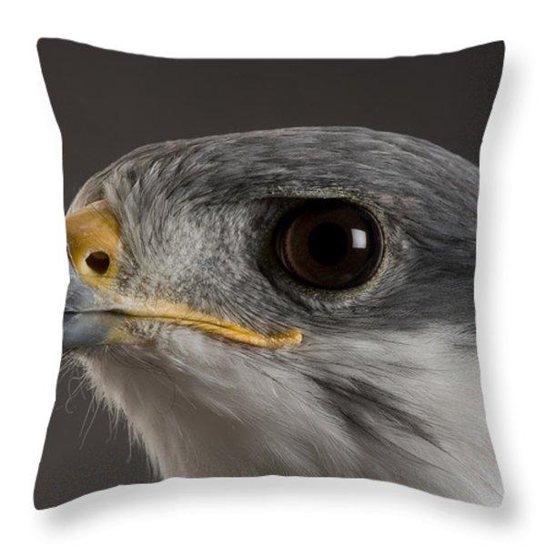 An Auger Buzzard Buteo Auger At Denver Throw Pillow by Joel Sartore