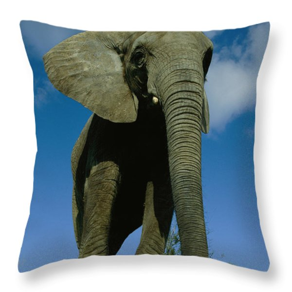 An Elephant At The Pittsburgh Zoo. This Throw Pillow by Michael Nichols