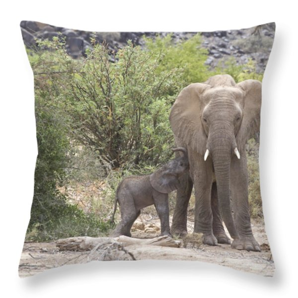 An Elephant Feeding Her Newborn Calf Throw Pillow by Michael Poliza