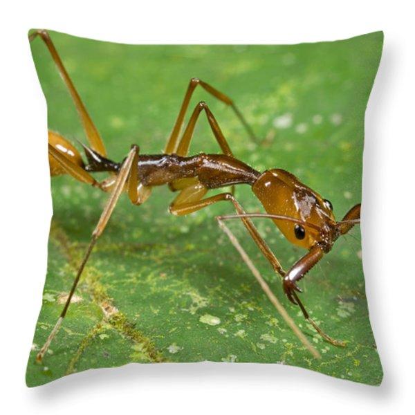 Ant Showing Large Mandibles Guyana Throw Pillow by Piotr Naskrecki