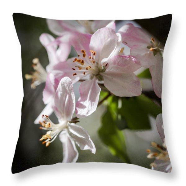 Apple Blossom Throw Pillow by Ralf Kaiser