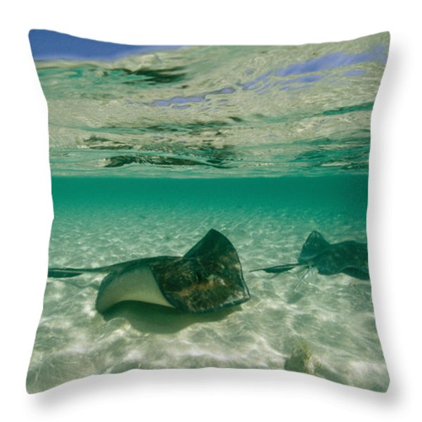 Aquatic Split-level View Of Two Throw Pillow by Wolcott Henry