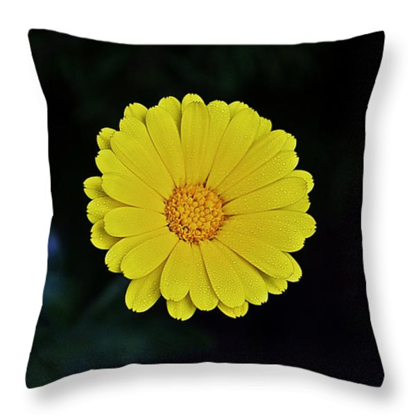 Artwork Of The Nature For A Moment Throw Pillow by Axko Color de paraiso
