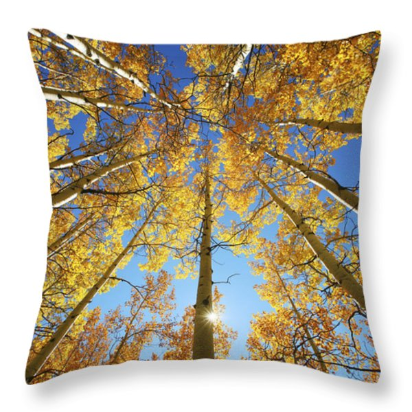 Aspen Tree Canopy 2 Throw Pillow by Ron Dahlquist - Printscapes