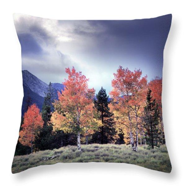 Aspens In Autumn Light Throw Pillow by Leland D Howard