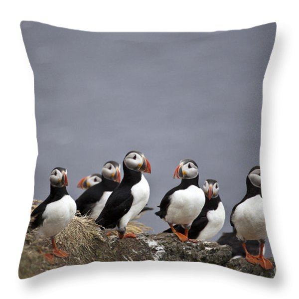 Atlantic Puffins On Cliff Edge Throw Pillow by Greg Dimijian