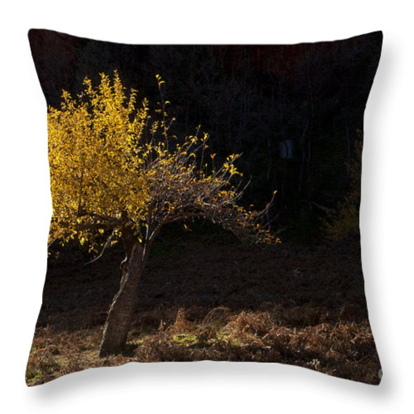 Autumn Light Throw Pillow by Mike  Dawson