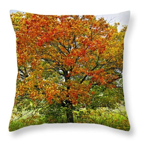 Autumn maple tree Throw Pillow by Elena Elisseeva