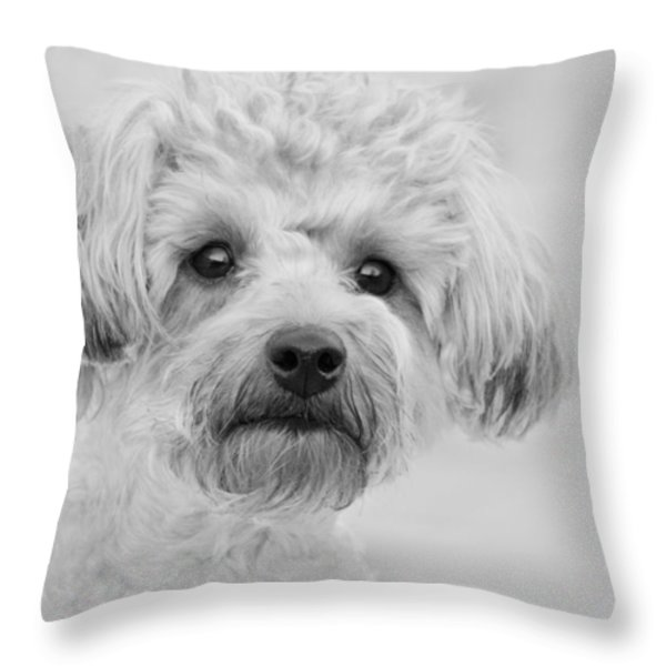 Awesome Abby The Yorkie-poo Throw Pillow by Kathy Clark