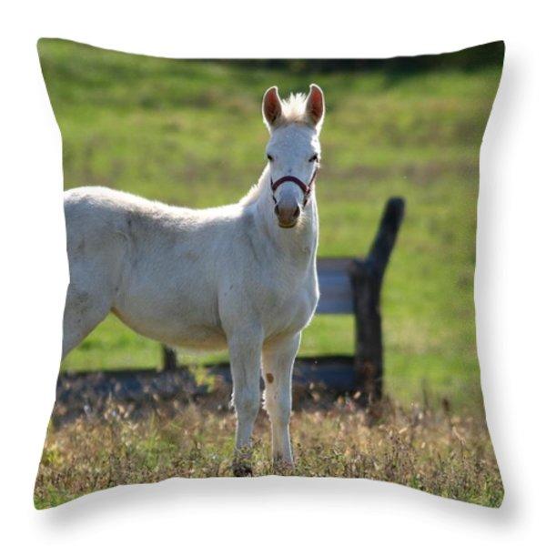 Baby Jack 1 Throw Pillow by David Dunham