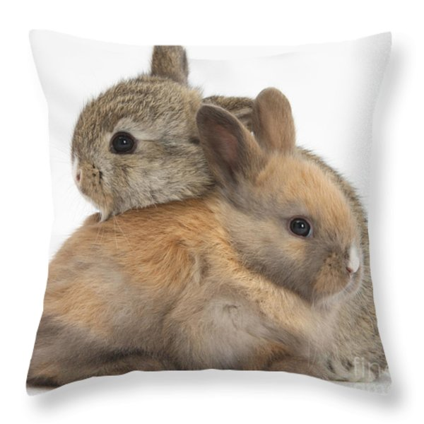 Baby Rabbits Throw Pillow by Mark Taylor
