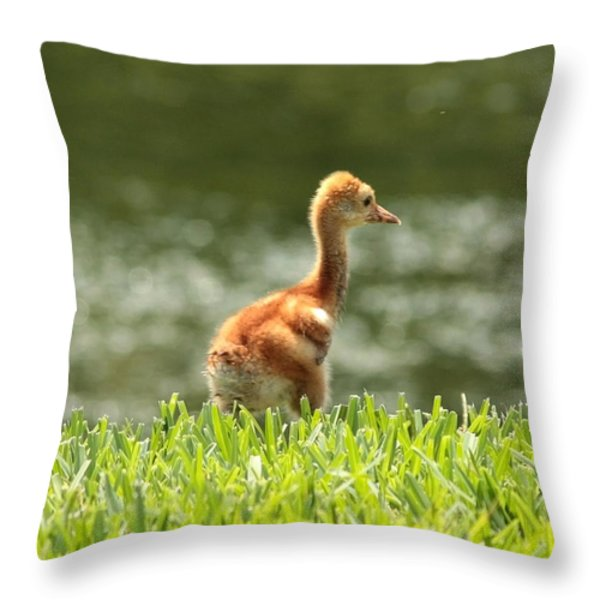 Baby Sandhill in the Sunshine Throw Pillow by Carol Groenen